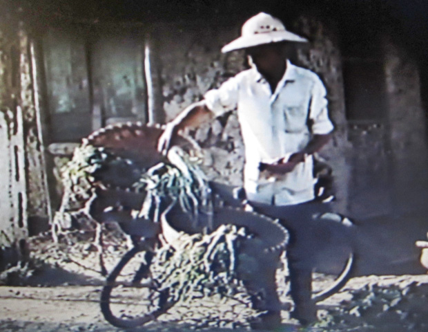 A man with a bicycle loaded with vegetables.